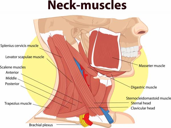 Major Causes of Neck Pain and What To Do About It