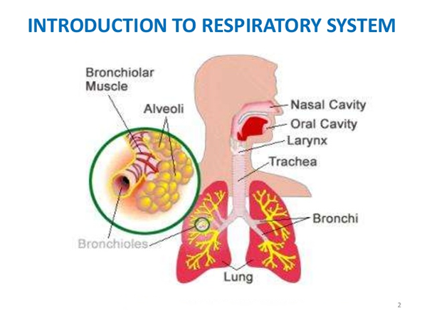 What is the Natural Treatment for Acute Respiratory Distress Syndrome?