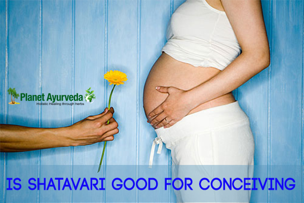 Is Shatavari Good for Conceiving