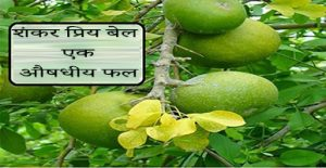 The Real Health Benefits of Bael Fruit