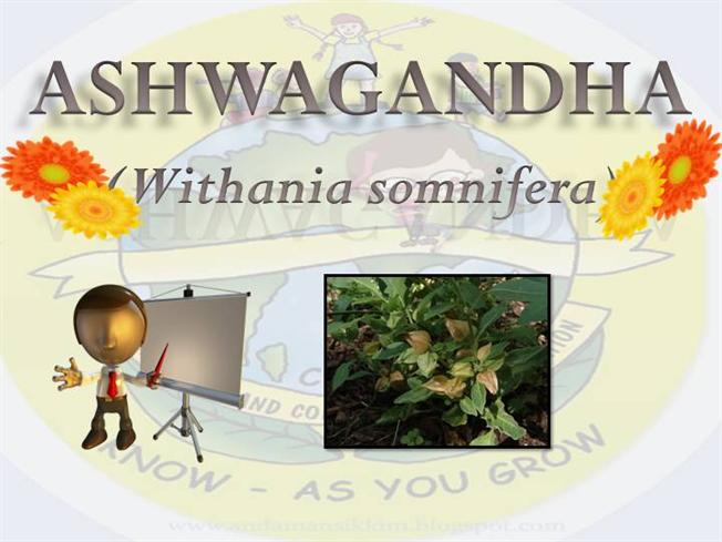 Health Benefits of Withania Somnifera